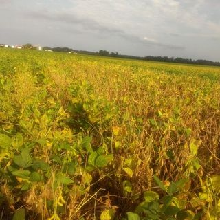 Darren Mueller, soybean sudden death
