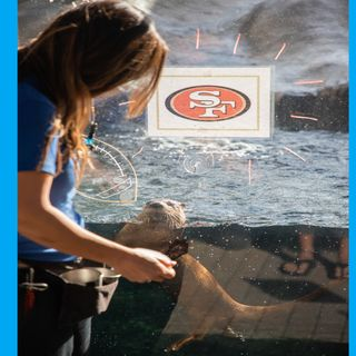 Stephannie Kettle - Mote Marine Lab - Who Otter Win the Super Bowl