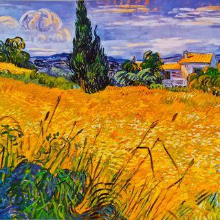 Campo di grano in erba con cipresso