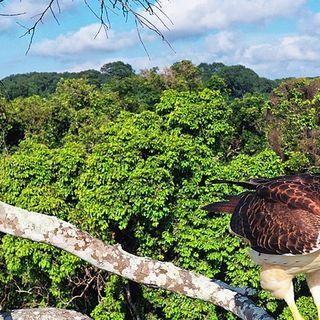 Modello Gabon il primo Paese a essere pagato per proteggere le foreste