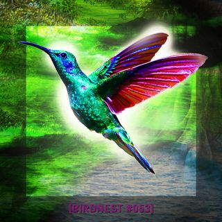 BIRDNEST #054 | SsOunday in Deep Flight | Podcast by The Lahar