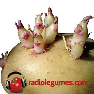 Bien cultiver les pommes de terre pour ne pas faire patate