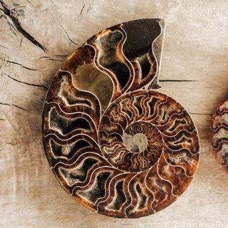 Ammonite Meaning Benefits and Spiritual Properties