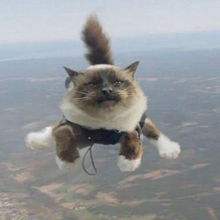 281 - Come fanno i gatti ad atterrare sulle zampe