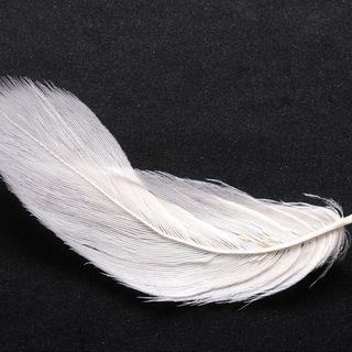 Beyaz Tüy