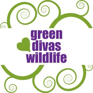 GDs Heart Wildlife: Take Action