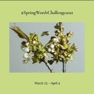 Parole di Primavera - Presentazione