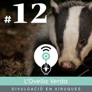 12    Què són els observatoris de fauna? La nostra experiència!