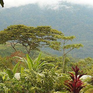 Operazione Recsoil il Costa Rica incentiva la qualità dei terreni