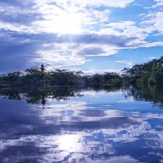 Così l'Europa può salvare l'Amazzonia