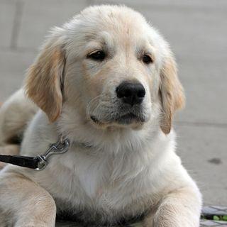 Trato ético a tu mascota. ¡No la maltrates!