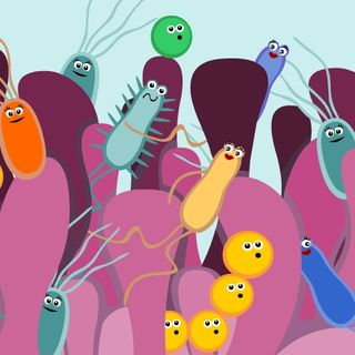 Youth Radio - Gut Bacteria Research