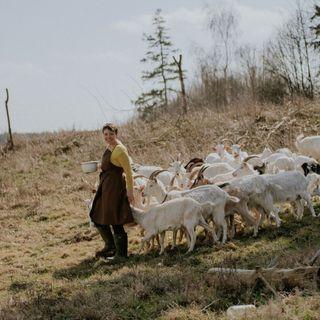 Koza na Lawendzie