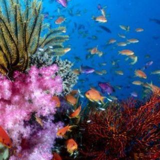 Da Bari a Monopoli scoperta una barriera corallina