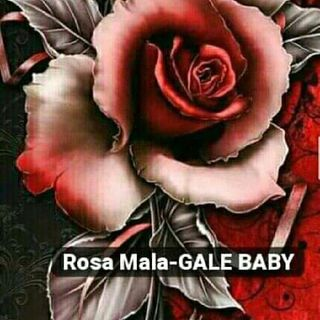 Rosa Mala - GALT BABY