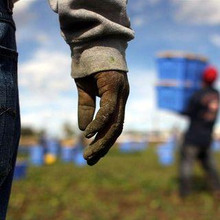 Tutto Qui - venerdì 12 aprile - Lo sblocco del decreto flussi in agricoltura: luci ed ombre del sistema