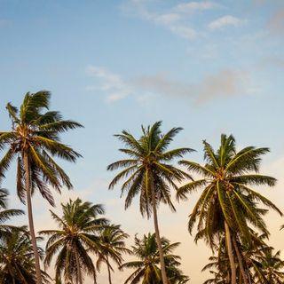 April 26  I See Palm Trees