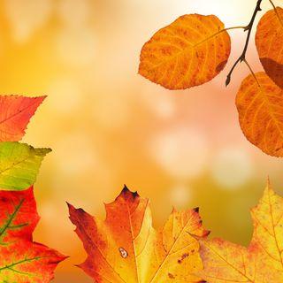 7 idee per le vetrine di autunno