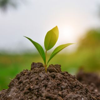 Is Carbon a Diamond in the rough for farmers? Reviewing the federal budget's soil strategy funding