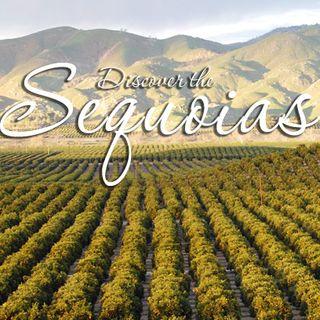 Big Blend Radio: California Sequoia Country Locals Insider