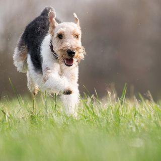 Perros en los Espacios Naturales Protegidos | el charco #17