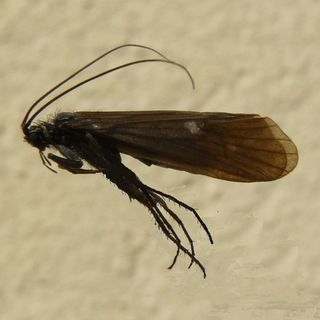 Talos - Il nuovo insetto scoperto al Parco del Monviso
