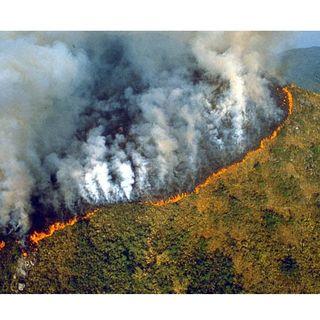 #oltrape La nostra foresta sta andando in fiamme