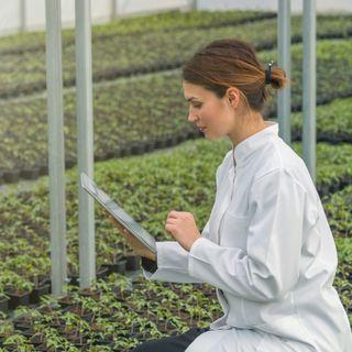 Pleno empleo para los ingenieros agrónomos