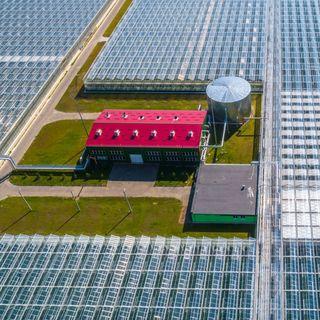Cómo Holanda se convirtió en una potencia agroalimentaria