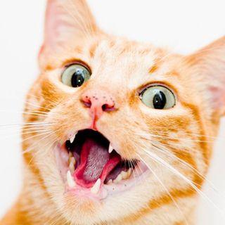 7 Preguntas que tiene Méndez sobre los gatos