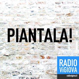 PIANTALA: la parola di Radio Vigiova