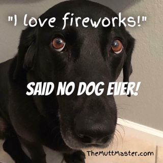 4th of July Tips Show 81 The Mutt Master