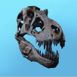 7 Il Paleontologo - A Caccia Di Dinosauri