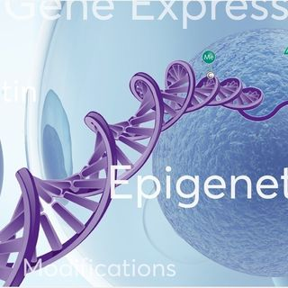 Can Environment Change DNA?