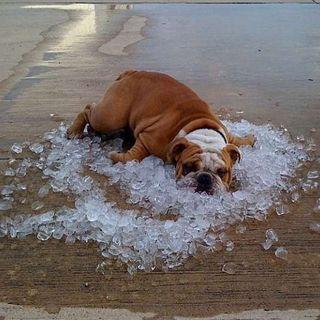 Come affrontare il caldo, restando calmo