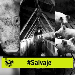 Salvaje: la industria del cerdo (CARNE CRUDA #851)