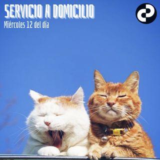 Servicio a domicilio 87