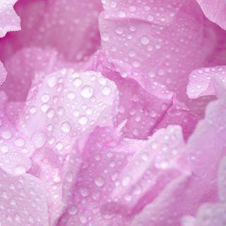 ROSA - Gentilezza e Amore infinito 🌈🎨