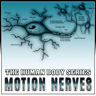 Motor Nerves (The Human Body Series)