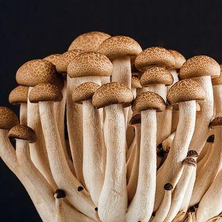 I Funghi sono Verdure?
