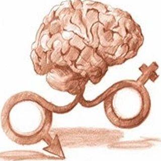 El cerebro y la sexualidad continuación