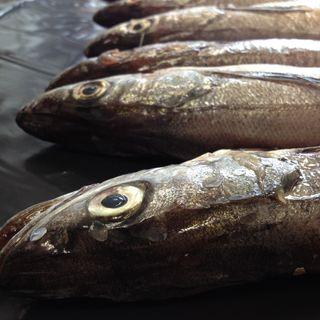 Conexión Pesquera - Noticia: Sernapesca anuncia plan de combate a la pesca ilegal
