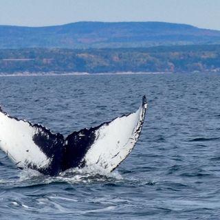 Québec Jour 14- observation des baleines