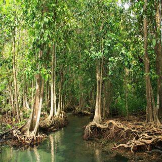 Reporta México incremento neto en superficie de manglar