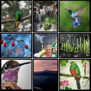 NUESTRO OXÍGENO Caminando entre las aves - Victoria Restrepo Duperly
