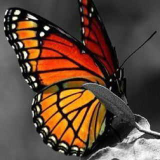 Butterfly ( Tibetan Bell And Shaman Voice)