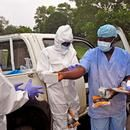 How Humanity Survives Pandemics