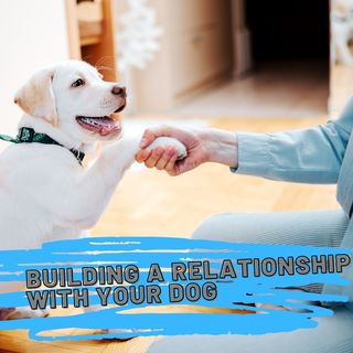 Building your relationship with your dog ep 34 3-28-2021