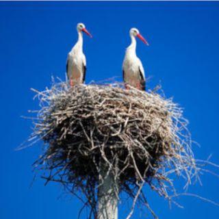 La complicata arte di costruzione di un nido