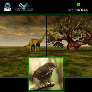 NUESTRO OXÍGENO Dinosaurios y nuevas especies
